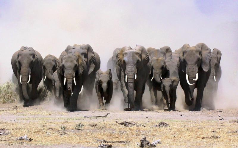 В течение жизни мы съедаем около 27 тонн пищи, что равно весу семи слонов.